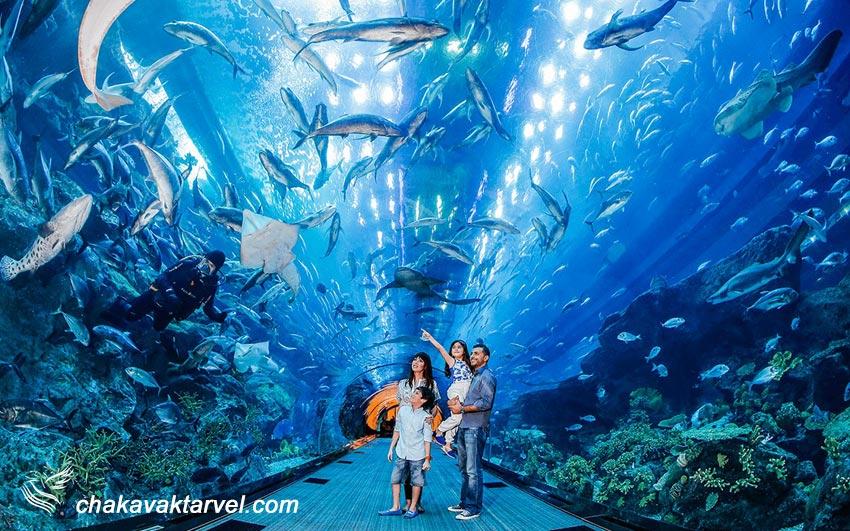 آکواریوم دبی مال ماهی امارات Dubai Mall Aquarium