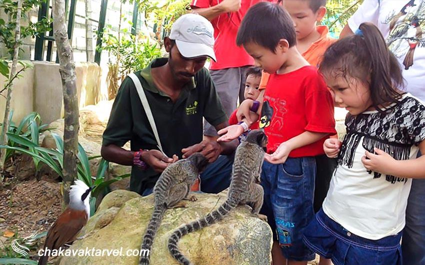 مزرعه در شهر کوالالامپور باغ وحشی برای نزدیکی با حیوانات در کوالالامپور