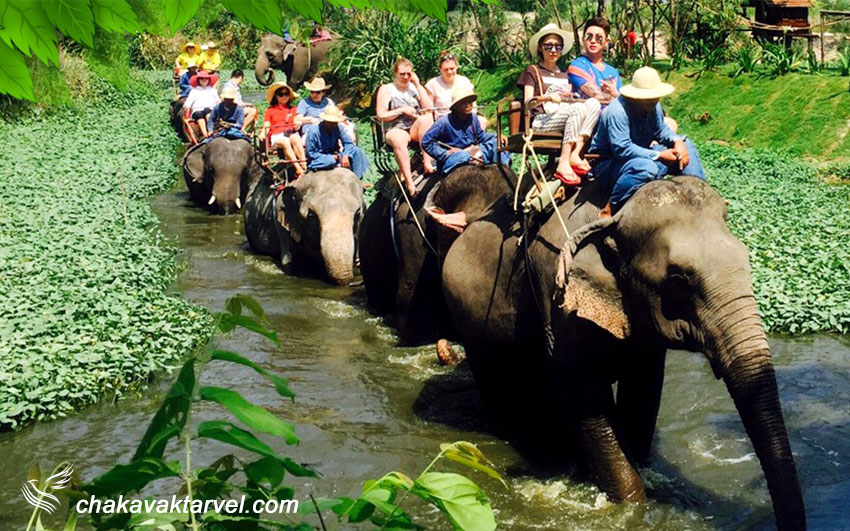 دهکده فیل ها | Pattaya Elephant Village
