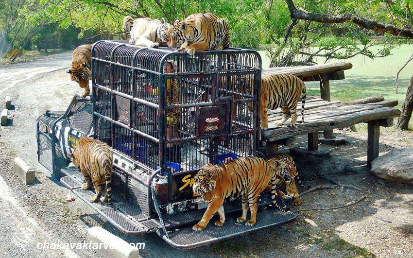 باغ وحش دنیای سافاری