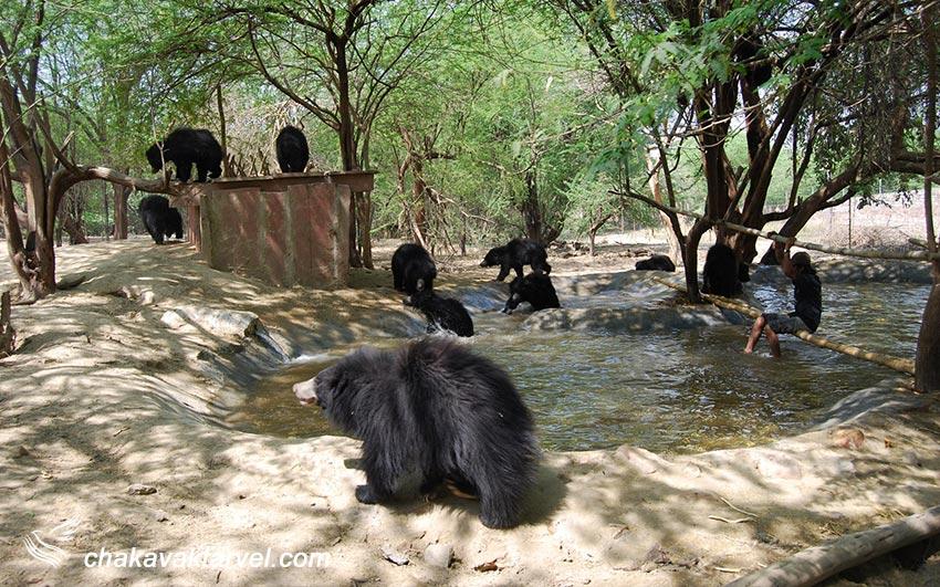 خانه نجات خرس ها