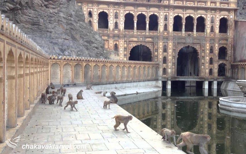 معبد میمون ها |Hanuman Ji Temple