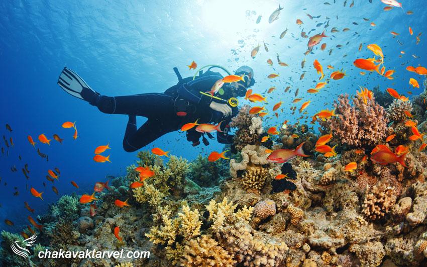 غواصی در آب های جزیره صباح مالزی