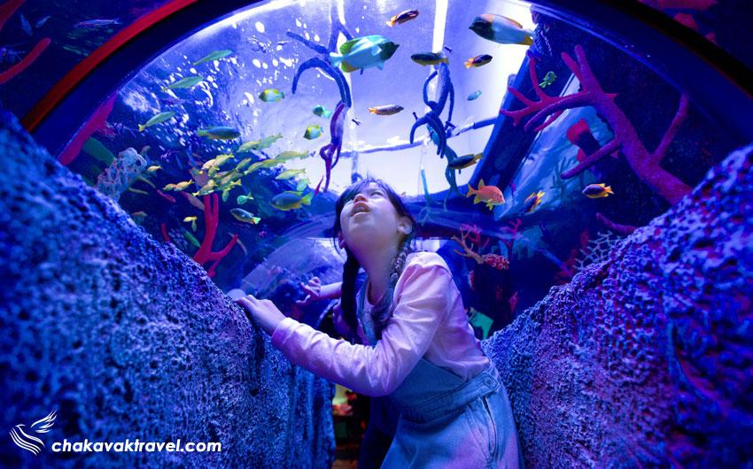 آکواریوم دریایی سی لایف مالزی مالزی Sea Life Malaysia در شهربازی