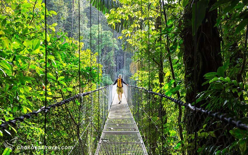 استرس زدایی با مسافرت و سفر ریلکس کردن در جنگل روی پل معلق در سفر و مسافرت