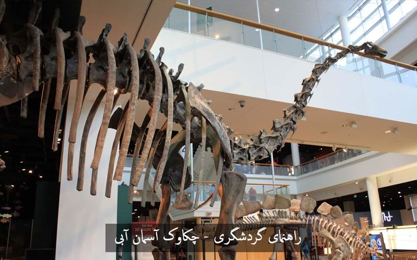 موزه حیات وحش و اسکلت دایناسور پربازدید ترین موزههای جهان