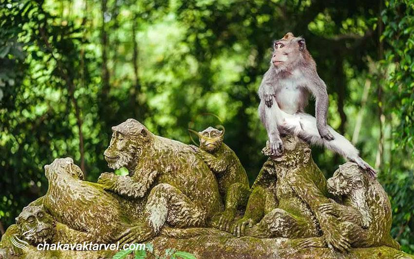 جنگل میمونهای اوبود بالی در اندونزی