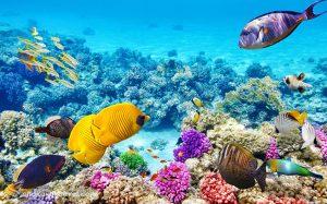 غواصی در آبهای گرمسیری و ماهی ها و مرجانهای زیبا